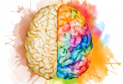 color drawing of a human brain